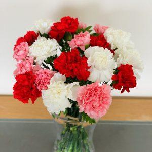 Order Carnations Online
